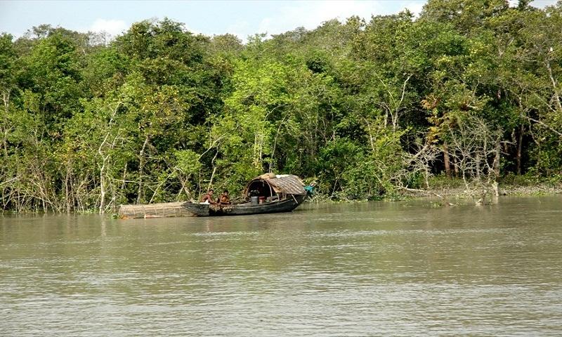 3 dead in Sundarbans 'shootout'