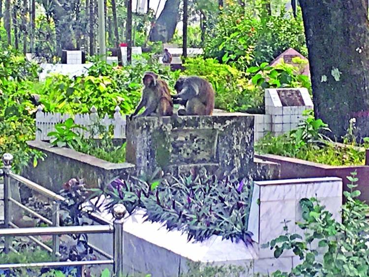 Monkeys on the prowl!