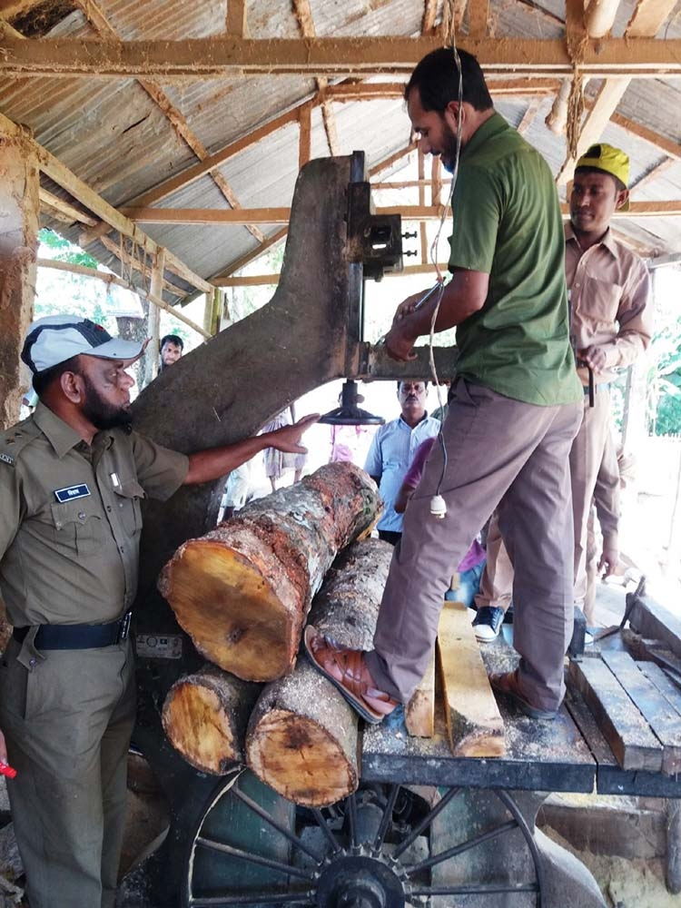 26 illegal sawmills pose  threat to Kulaura forest