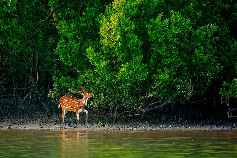 Sundarbans getting back trees: Minister