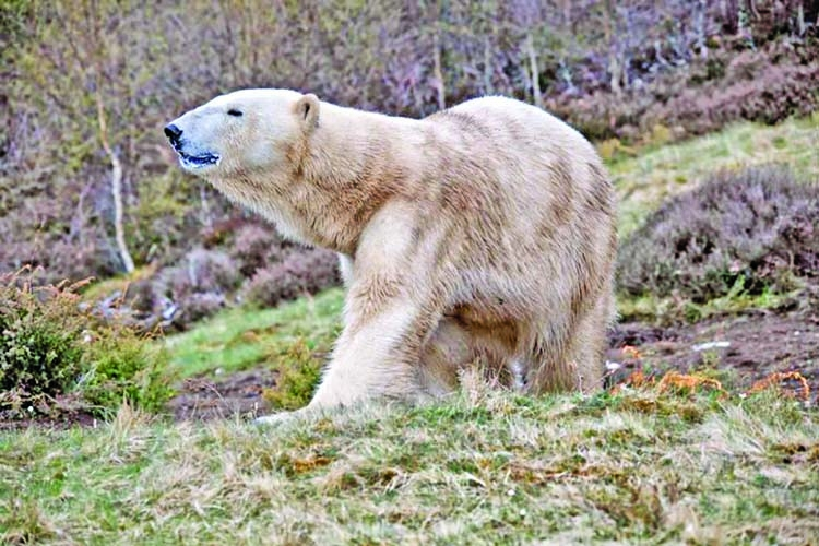First polar bear born in Britain in 25 years