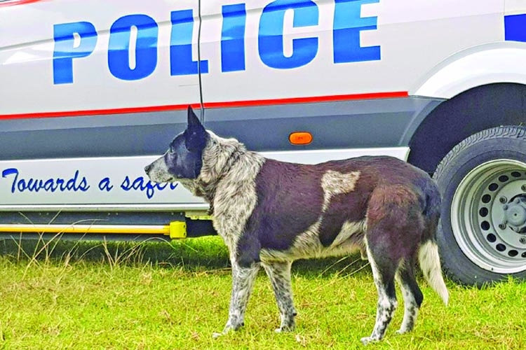 Dog receives police honors in Australia