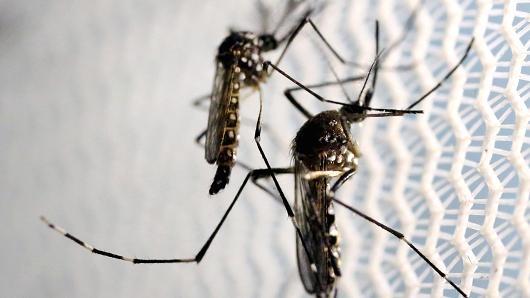Scientists develop new tool to target mosquito-borne Zika virus
