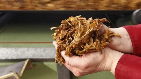 Tobacco kills 7 million a year: WHO
