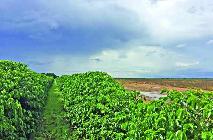 Brazil sugar, coffee producers lock in profits on currency drop