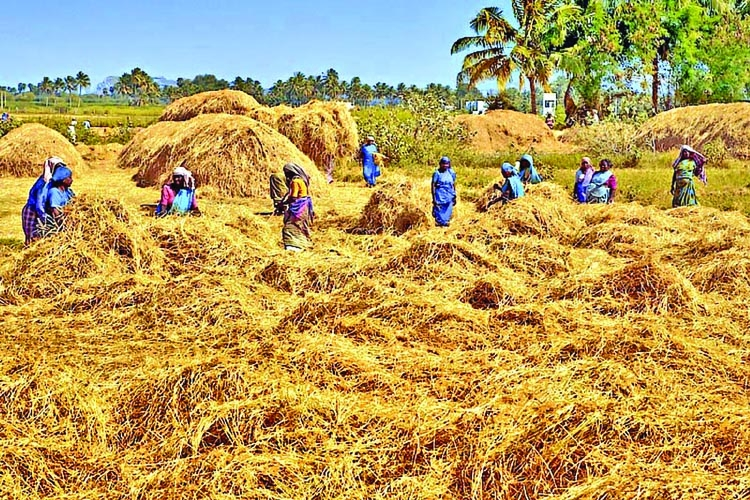Rice tariff restoration  raises paddy price