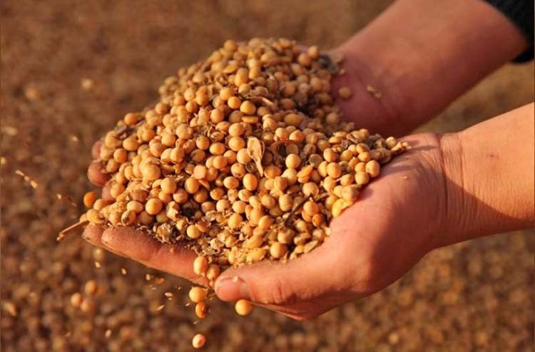 China soybean prices spike