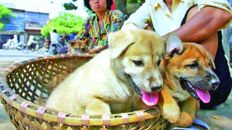 Vietnam asks people not to eat dog meat