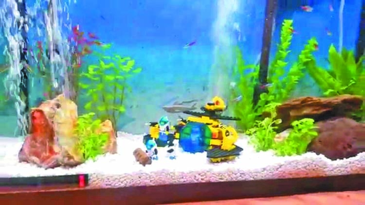 Fish tank decoration ideas using everyday items