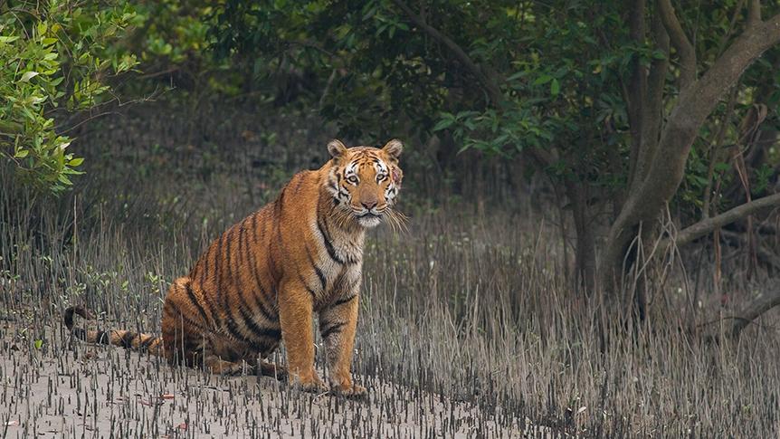Sundarban wildlife gets extended sanctuary