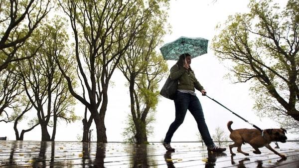 China city curbs dog walking, bans them in parks, stadiums