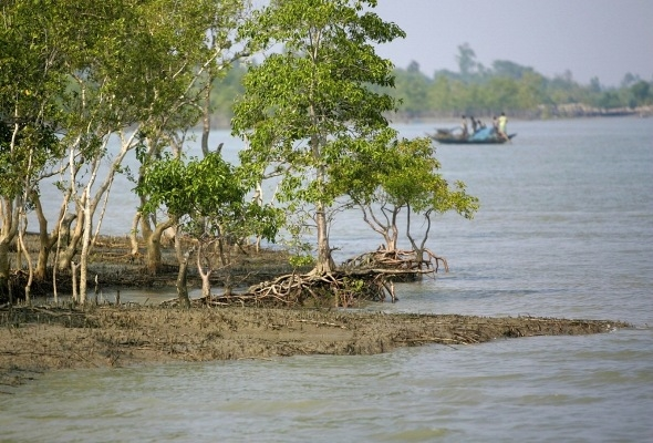 HC orders judicial probe into poaching of 22 Sundarbans deer
