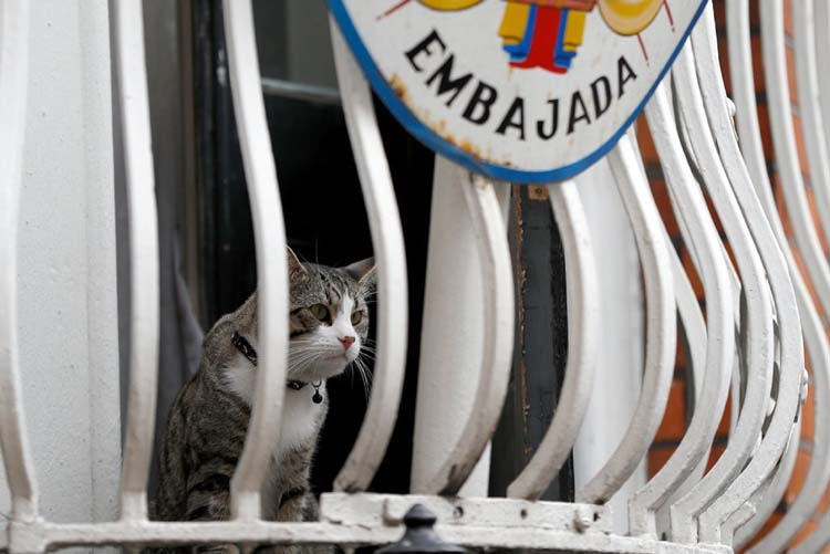 What happened to Julian Assange's cat?