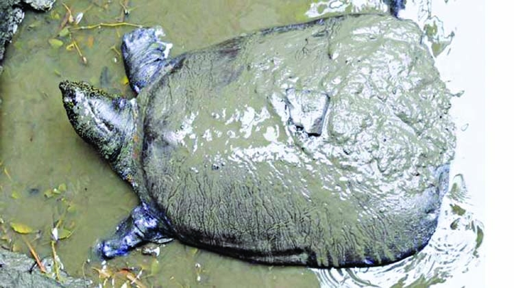 One of the world's rarest turtles dies