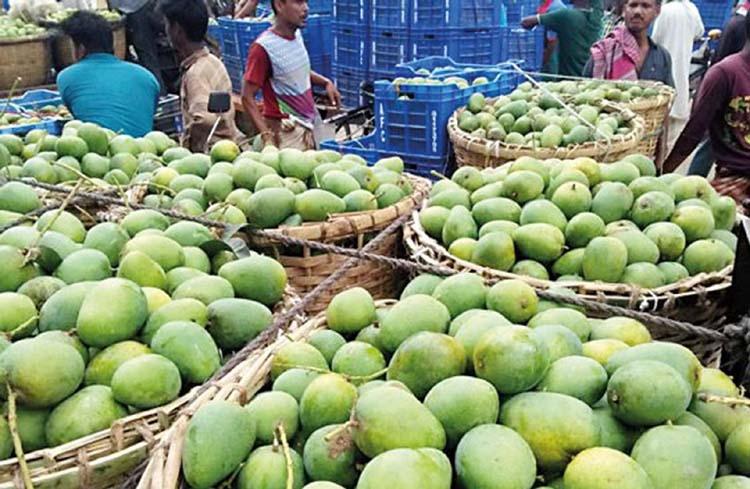 Mango starts coming in Rajshahi markets