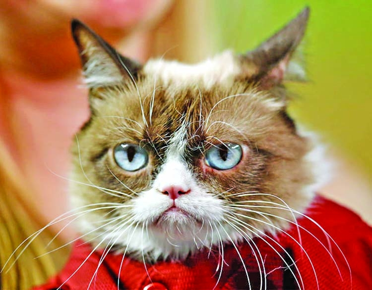 Internet star Grumpy Cat dies
