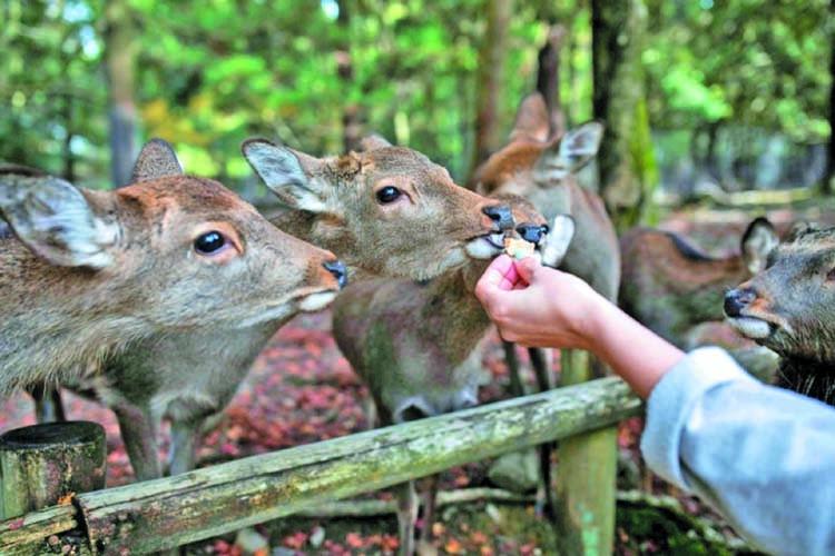 Nine deer dead in Japan after eating plastic