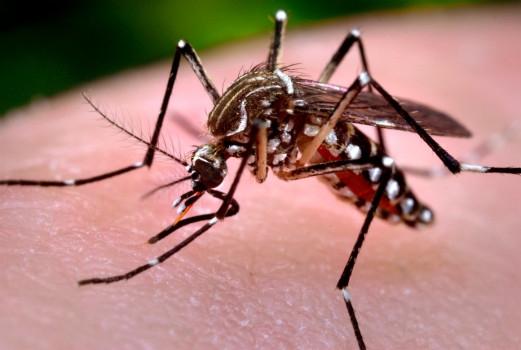 Minor boy dies of dengue in Dhaka