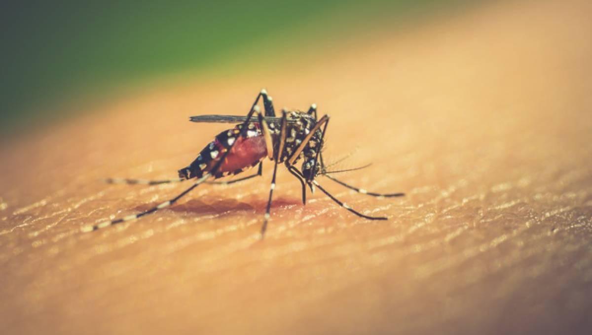 Surging dengue: 3 more die, 2428 more get infected afresh