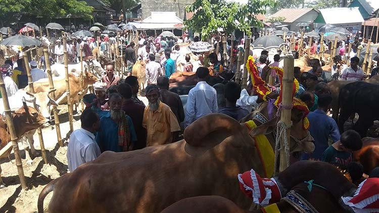 One lakh sacrificial animals are ready