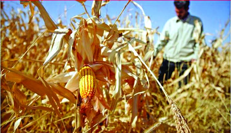 Climate change threatens global food security: IPCC