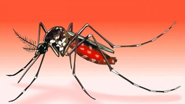 Teenage girl dies of dengue in Thakurgaon