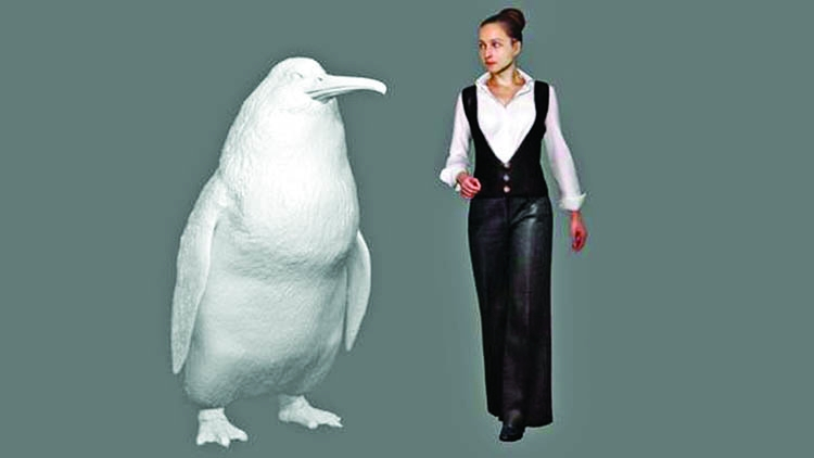 'Human-sized penguin' lived in NZ