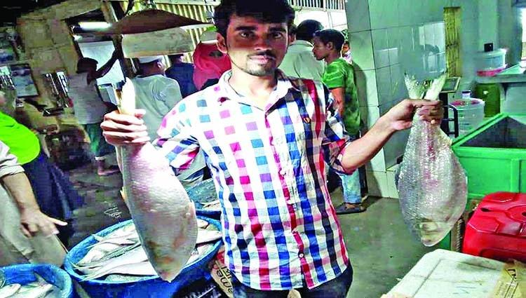 Hilsha selling like hot cake in wholesale market