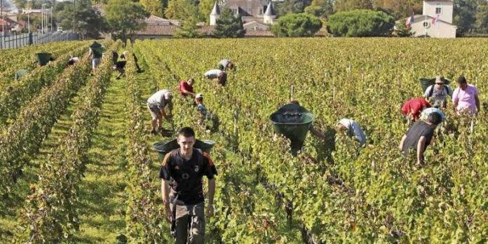 Paris, four other French cities ban use of pesticides