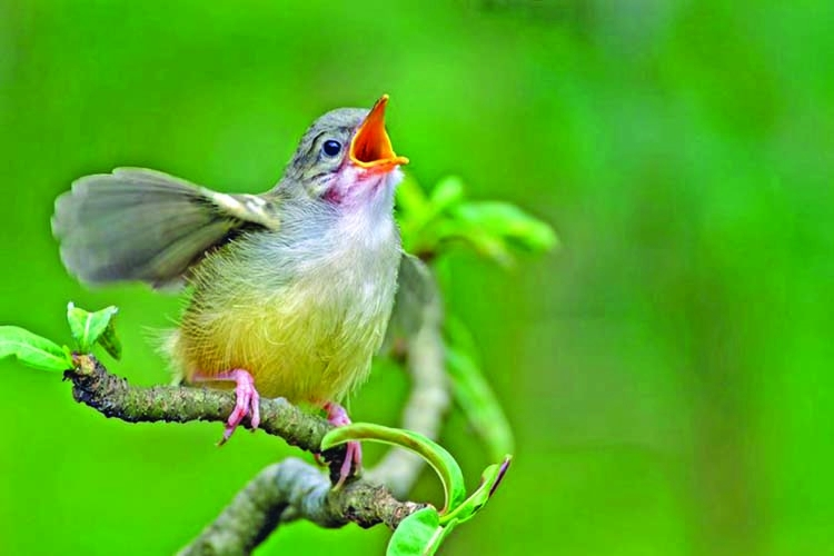Songbirds are struggling with noise pollution