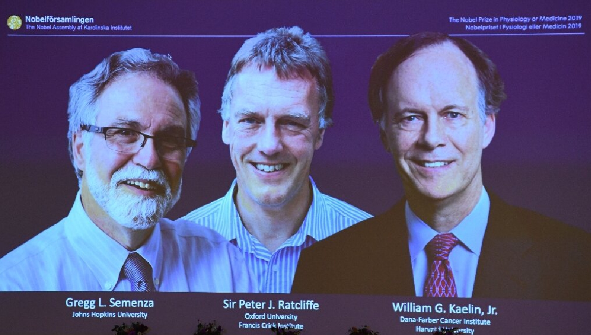 3 win Nobel Prize for showing how cells sense low oxygen