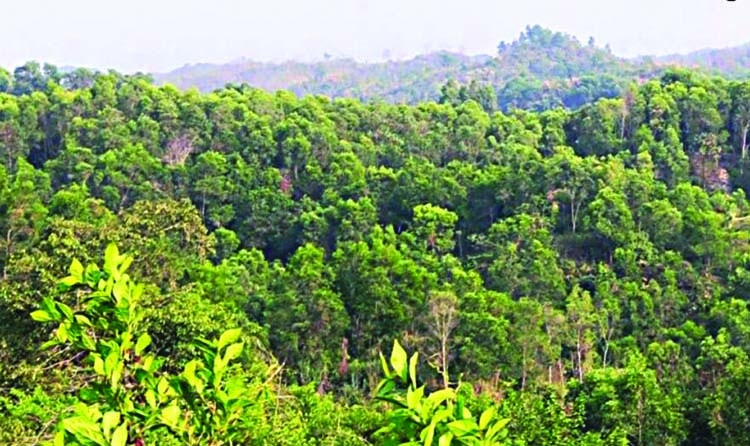 'Tree plantation essential to combat climate change'