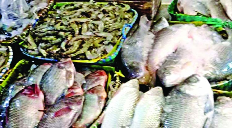 Fish price increases in Chattogram