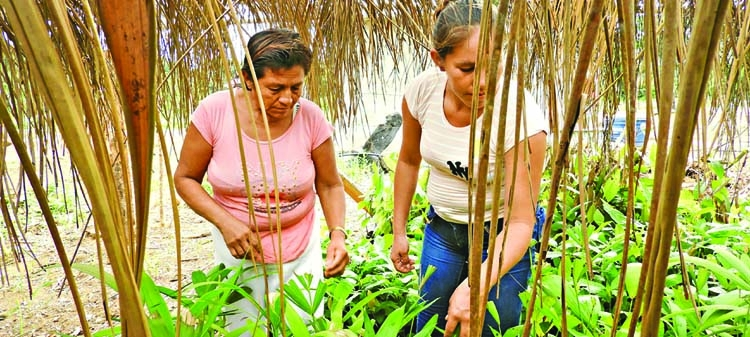 Empowering women in the Bolivian Amazon