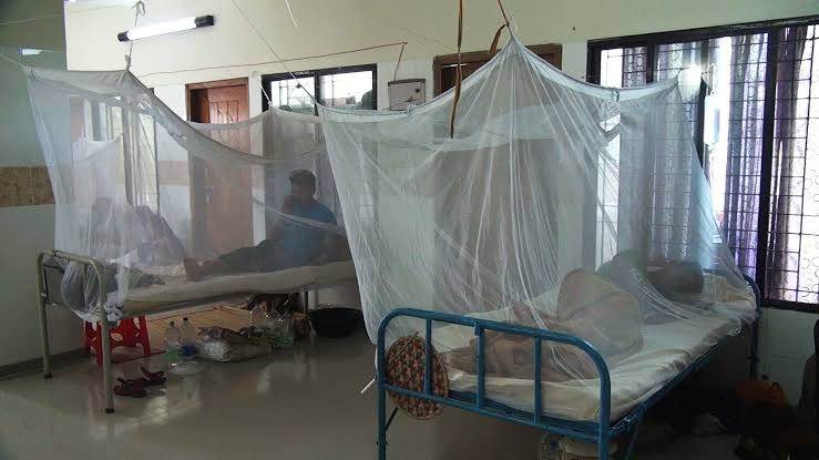 174 new dengue patients hospitalised in 24hr