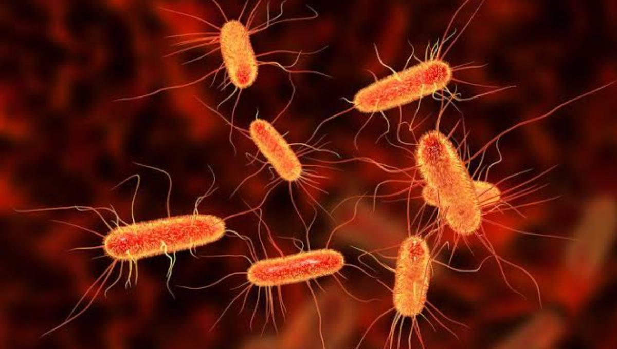 E.coli outbreak hits luxury island resort on Australia's east coast