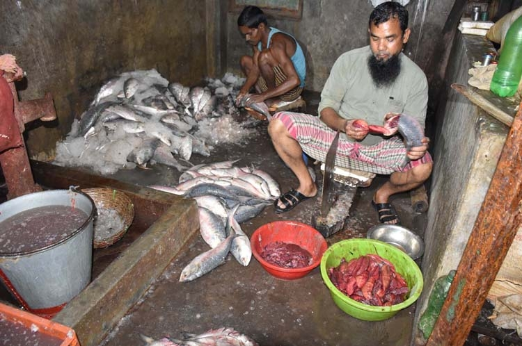 Barisal fish market flooded with mother hilsa