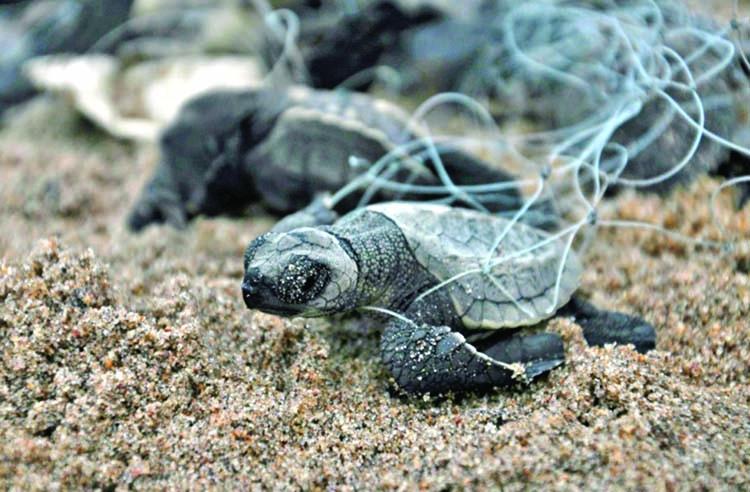 'Ghost' fishing gear: Trash haunting ocean wildlife