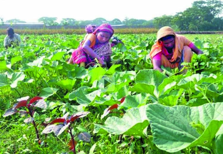 Winter vegetable get boosts in Chattogram