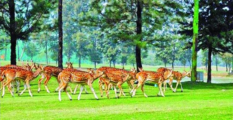 Biodiversity at risk in Nijhum Dwip