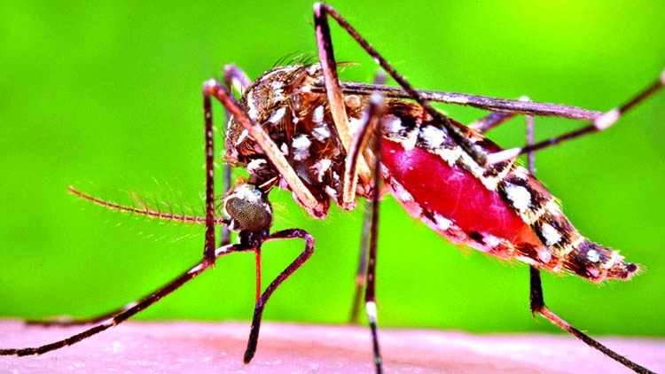 128 new dengue patients in a day