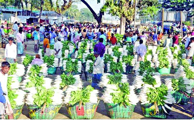 Winter vegetables get boosts in Dohazari