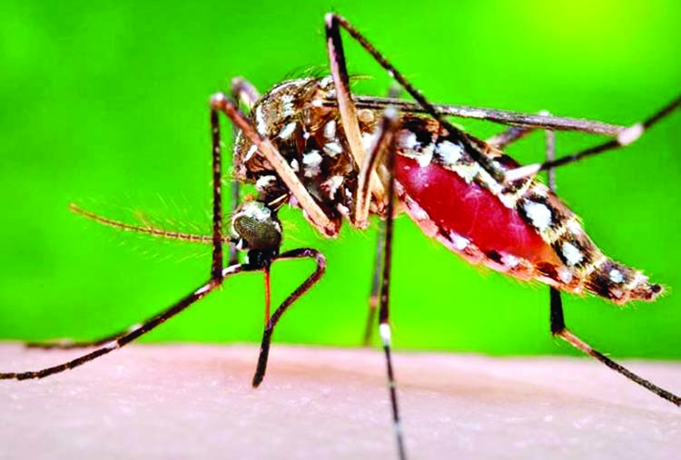86 new dengue patients in a day