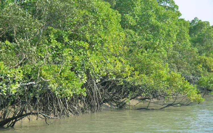 Sundarbans: The natural shield of Bangladesh