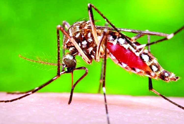425 dengue patients under treatment