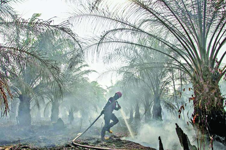 'Indonesian fires damaged 1.6 m hectares of land this year'