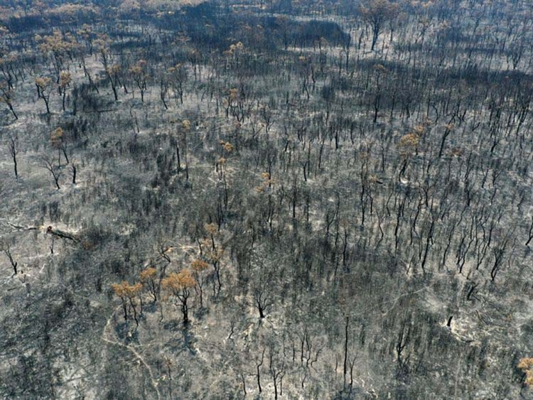 Australia: A climate horror story told by walls of fire