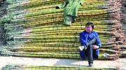 China slaps import duties on sugar