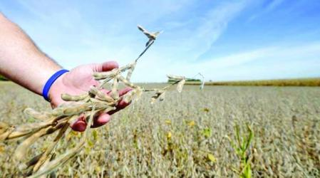 US soy processors build new capacity