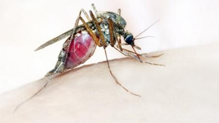 $3.8bn for fight against malaria